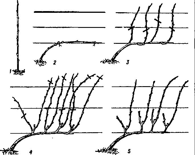 Рис. 12 Выведение